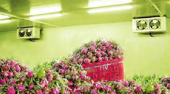 kho lanh bao quan thanh long - Lắp đặt kho lạnh bảo quản thanh long cho các nhà vườn